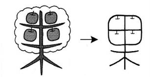 kanji 果