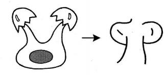 kanji 卵