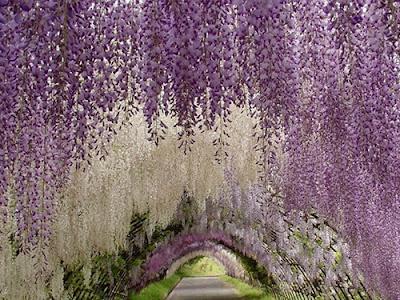 Chiêm ngưỡng vẻ đẹp các loài hoa tháng 5 tại Nhật Bản