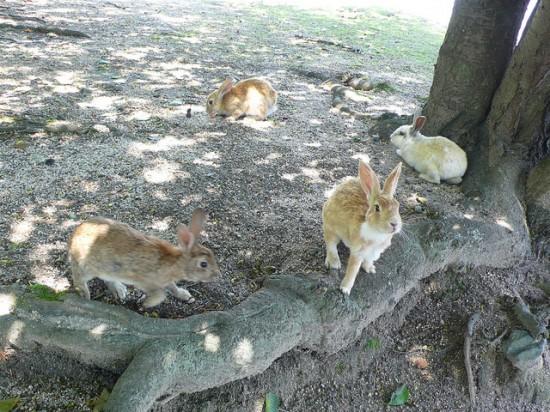 dao tho 2 Đảo thỏ Okunoshima