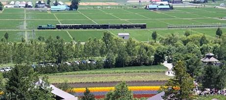 duhochoasen104 Ngắm hoa Lavender bằng 'bus máy kéo' ở Hokkaido