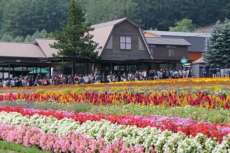 duhochoasen77 Ngắm hoa Lavender bằng 'bus máy kéo' ở Hokkaido