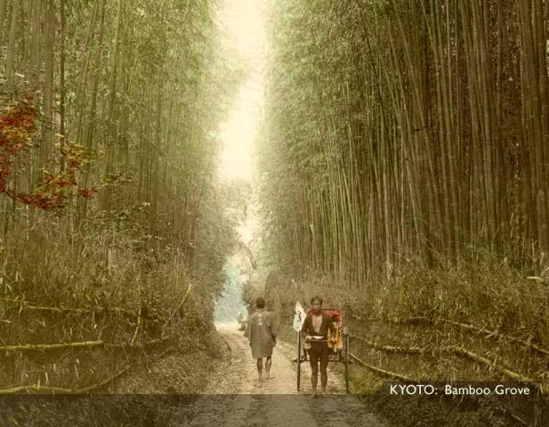 Kyoto Bamboo [Tổng Hợp]   Những bức ảnh về nước Nhật xưa