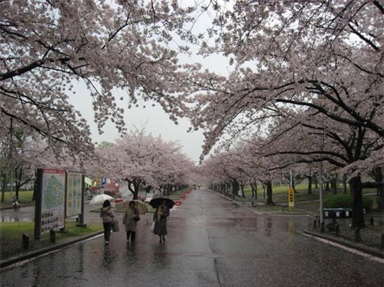 Những quy tắc đáng lưu ý khi đến Nhật Bản