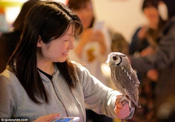 quan cafe cho nhung nguoi thich chim cu o nhat Quán cafe cho những người thích chim cú ở Nhật