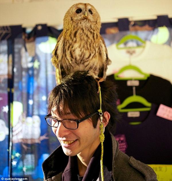 quan cafe cho nhung nguoi thich chim cu o nhat ban Quán cafe cho những người thích chim cú ở Nhật