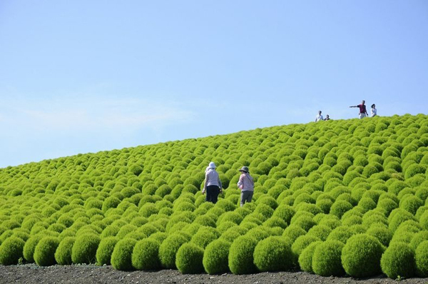 cong vien Hitachi 04 Thiên đường hoa bốn mùa ở Nhật