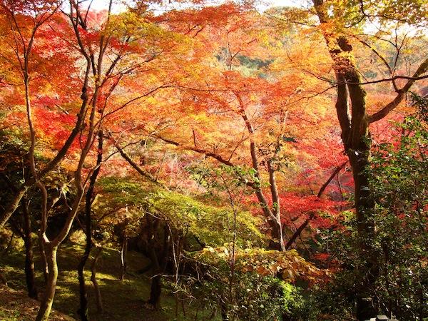 thu vui ngam la vang tai nhat ban Thú vui ngắm lá vàng tại Nhật Bản