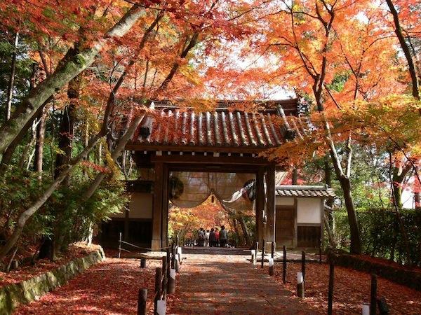 thu vui ngam la vang tai nhat ban1 Thú vui ngắm lá vàng tại Nhật Bản