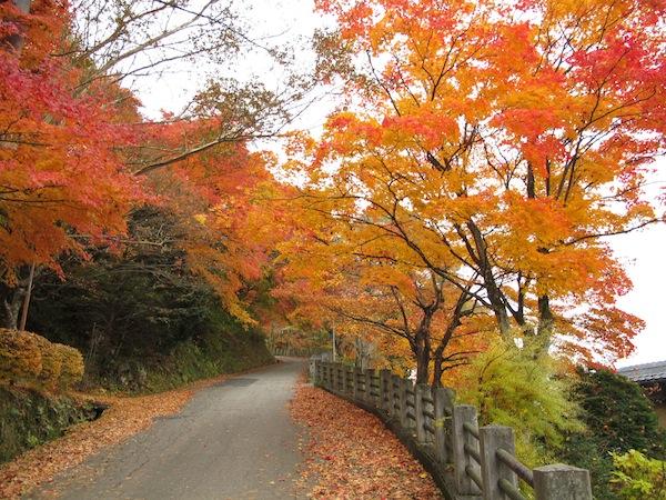 thu vui ngam la vang tai nhat ban3 Thú vui ngắm lá vàng tại Nhật Bản