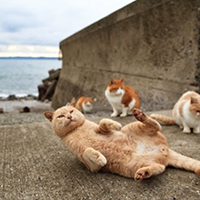 """Khám phá """"thiên đường"""" mèo tại Nhật Bản"""