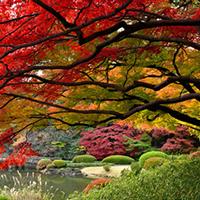Ngắm mùa thu huyền diệu xứ sở Phù Tang