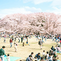Người Nhật Bản tận hưởng những ngày nghỉ lễ như thế nào?