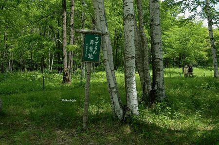 duhochoasen1210 Thung lũng hoa Linh Lan ở Hokkaido