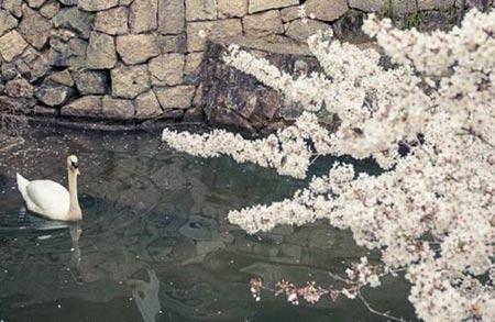 du lich nhat ban 6 duhochoasen Venice Nhật Bản lãng mạn