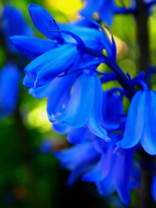 Buruberu Ý nghĩa 17 loài hoa ở Nhật Bản