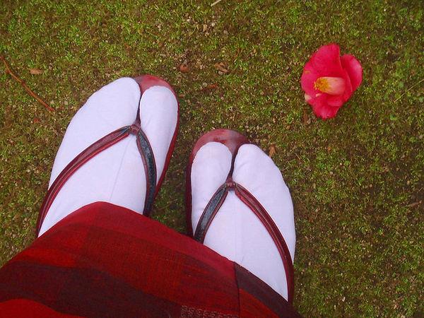 Tsubaki Ý nghĩa 17 loài hoa ở Nhật Bản