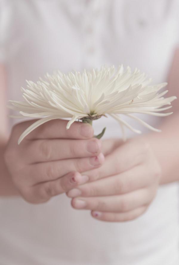 Shiragiku Ý nghĩa 17 loài hoa ở Nhật Bản