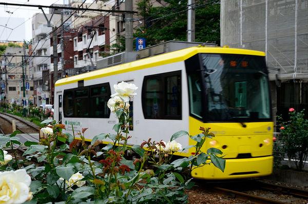 Kiiroibara Ý nghĩa 17 loài hoa ở Nhật Bản