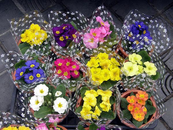 Sakuraso Ý nghĩa 17 loài hoa ở Nhật Bản
