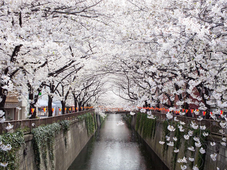 Cảnh đẹp thiên đường ở Nhật Bản qua 25 bức ảnh