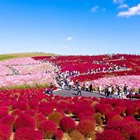 Thiên đường hoa bốn mùa ở Nhật