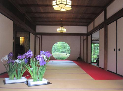 Meigetsuin nhat ban Vẻ đẹp rực rỡ của hoa tú cầu trong mùa mưa ở Nhật