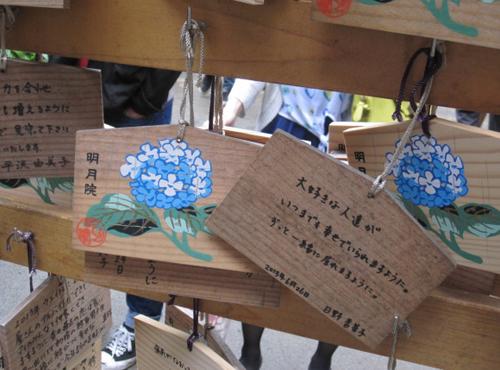 ajisai Meigetsuin Vẻ đẹp rực rỡ của hoa tú cầu trong mùa mưa ở Nhật